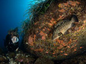 """Grande successo per il concorso subacqueo """"Promontorio di Portofino""""."""