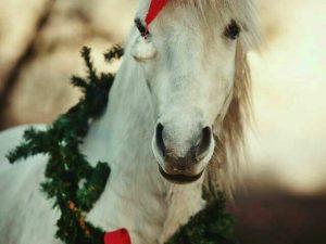 A Natale un cavallo sotto l'albero per il Gaslini